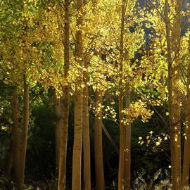Guido Montanes Castillo - Autumn secrets II
