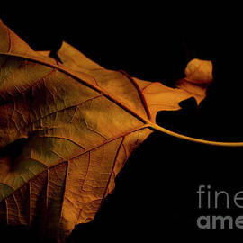 Ivete Basso Photography - Autumn Solitary Leaf