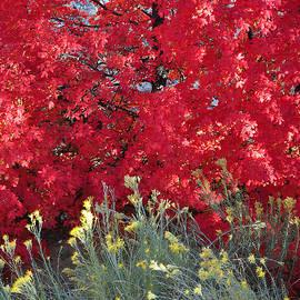 Autumn Splendor In Zion National Park by Bruce Gourley