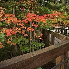 LuAnn Griffin - Autumn Stroll #2