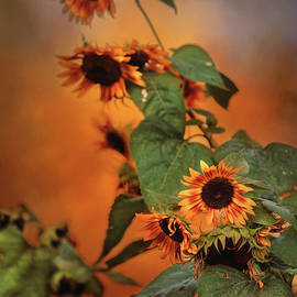 Theresa Campbell - Autumn Sunflowers
