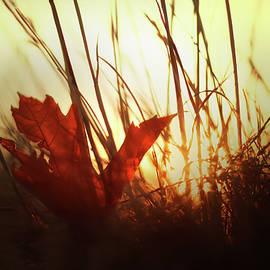 Kathryn Stone - Autumn Sunset