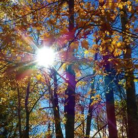 Autumn Sunshine by Cristina Stefan