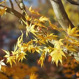 Marla McPherson - Autumn Textures