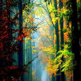 Autumn Trails in Georgia