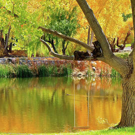 Donna Kennedy - Autumn Tranquility