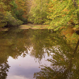 Autumn Woodland Pond At Jeffries Creek by MM Anderson