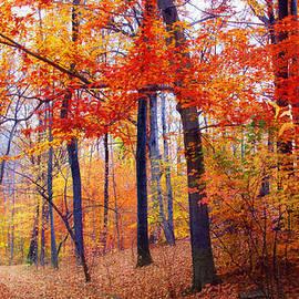 Autumn Woodland Trail by Jessica Jenney
