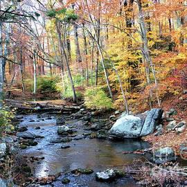 Judy Palkimas - Autumn Woodlands