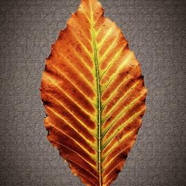 Autumnal Avatar by Yuri Lev