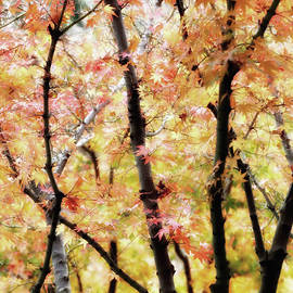 Nicholas Blackwell - Autumnal Impressions