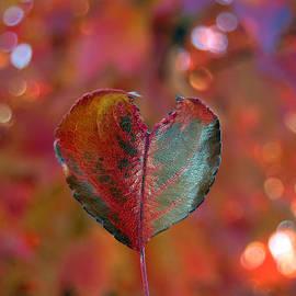 Debra Thompson - Autumn