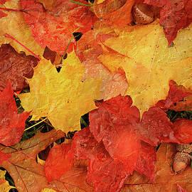 Jill Love - Autumns Gifts