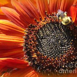 Autumn's Sunflower by Dora Sofia Caputo