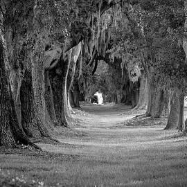 Avenue of Oaks Revisited Sea Island Golf Club St Simons Island, GA by Reid Callaway