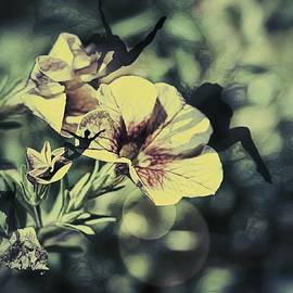 Shelley Smith - Awaken To Blossom
