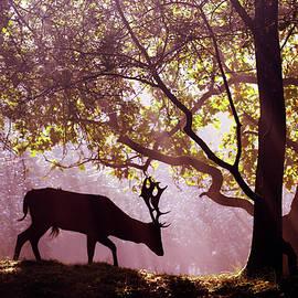 Roeselien Raimond - Awakenings -Fallow Deer