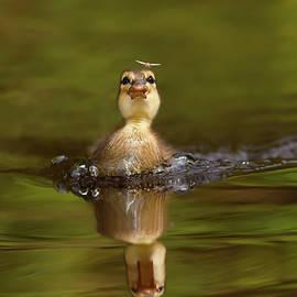 Roeselien Raimond - Baby Animal Series - Hunting Duckling