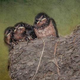 Baby Barn Swallows by Yuri Lev
