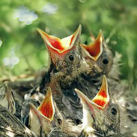 Oksana Ariskina - Baby Birds