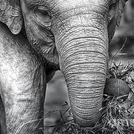 Charuhas Images - Baby Elephant 1