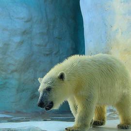 Michael Rucker - Baby Polar Bear