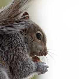 Trina Ansel - Baby Squirrel Portrait
