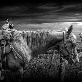 Back at the Ranch in Black and White by Randall Nyhof