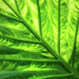 Don Johnson - Backlit Leaf
