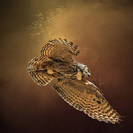 Donna Kennedy - Backlit Owl