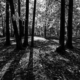Allan Van Gasbeck - Backlit Shadows Gellatly Park