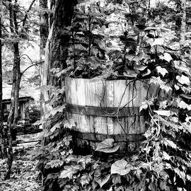 Backwoods v2 by John Straton