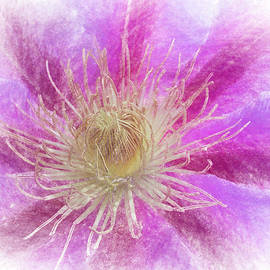 Backyard Clematis by Jeff Oates Photography