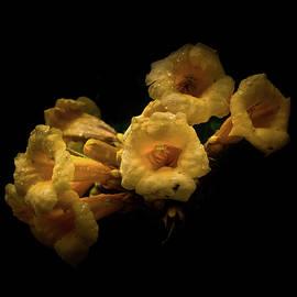 Brian Carson - Backyard Flowers 63 Color Version