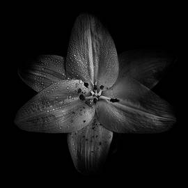 Brian Carson - Backyard Flowers In Black And White 28