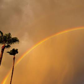 Backyard Rainbow by Cathy Franklin