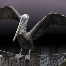 Balancing Act - Pelican by Debi Dalio