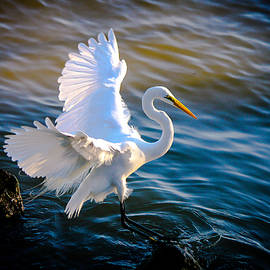 Balancing Act  Great White Egret  by Ola Allen