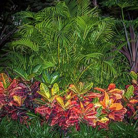 Daniel Hebard - Balboa Jungle Garden