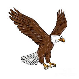 Aloysius Patrimonio - Bald Eagle Flying Drawing