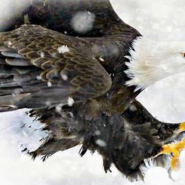 Jean Francois Gil - Bald Eagle