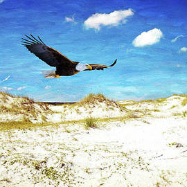 Bald Eagle on Cumberland Island - Laura D Young
