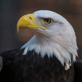Chris Flees - Bald Eagle Painting