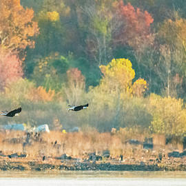 Jeff at JSJ Photography - Bald Eagle Pair with Fish and Foliage