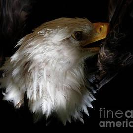 Bald Eagle Perspective by Sue Harper
