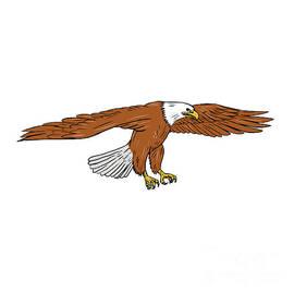 Aloysius Patrimonio - Bald Eagle Swooping Drawing