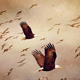 Bald Eagles and Seagulls