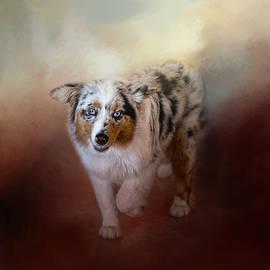 Ball Of Energy - Australian Shepherd by Jai Johnson