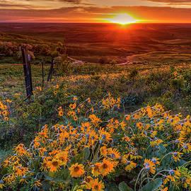 Balsamroot Sunset by Mark Kiver