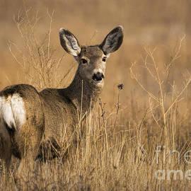 Priscilla Burgers - Bambi Beauty
